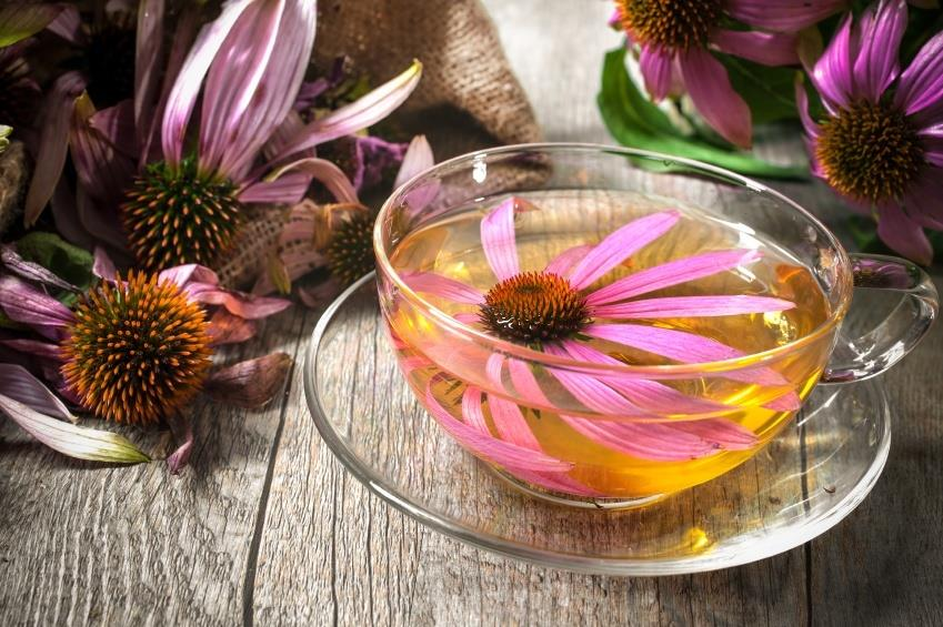 32102155-echinacea-purpurea-cup-of-echinacea-tea-on-wooden-table